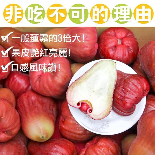【鮮果日誌】蓮霧界的LV 黑糖芭比4台斤