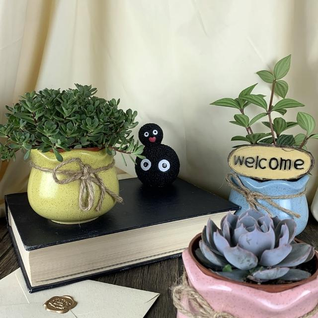 【園藝世界】活體植物-花圈馬卡龍組(3吋套盆 活體植物)