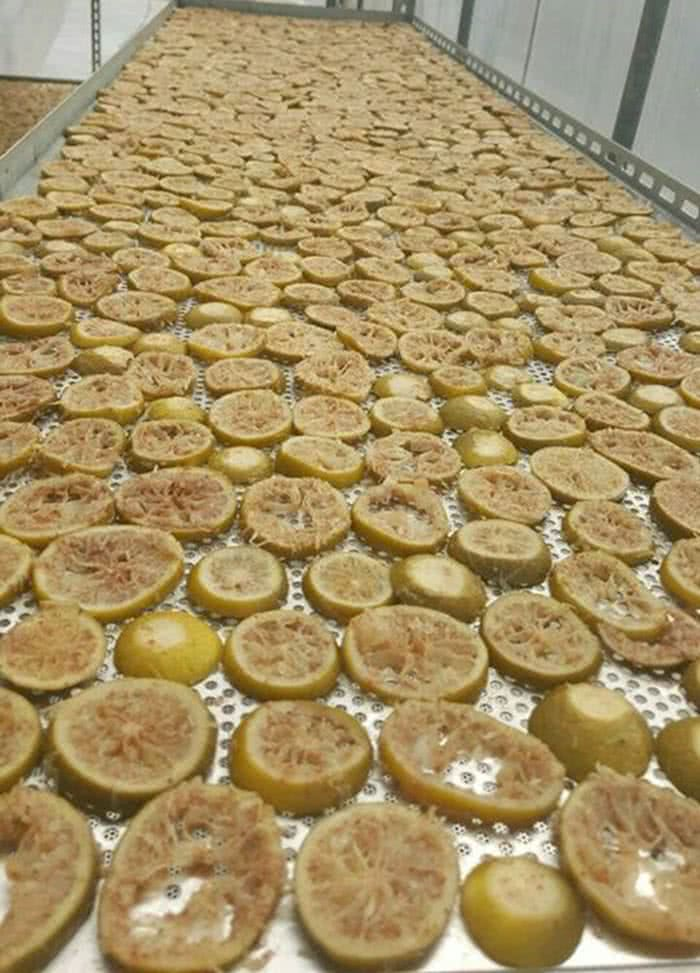 lemon700_2.jpg