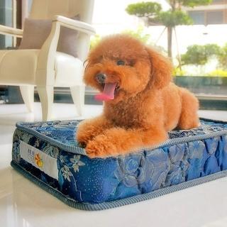 【凱蕾絲帝】寵物專用獨立筒彈簧床墊(特大-60*120*11cm)