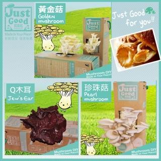 【Just Good 就是菇】火熱上市!! QQ黑木耳 5盒裝(新年春節限量版上市!)
