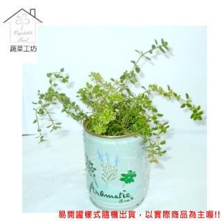 【蔬菜工坊004-E10】iPlant易開罐花卉-百里香
