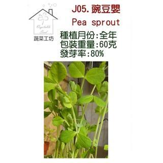【蔬菜工坊】J05.豌豆嬰種子(芽菜種子)