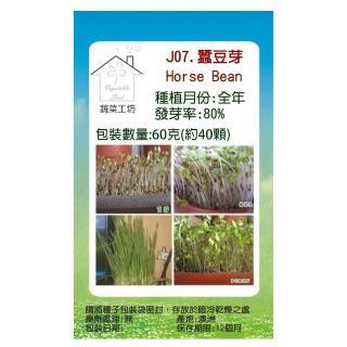 【蔬菜工坊】J07.蠶豆芽種子(芽菜種子)