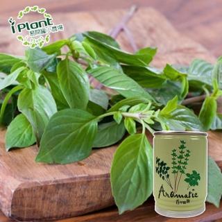 【iPlant】易開罐頭小農場-九層塔(開心農場療鬱小物)