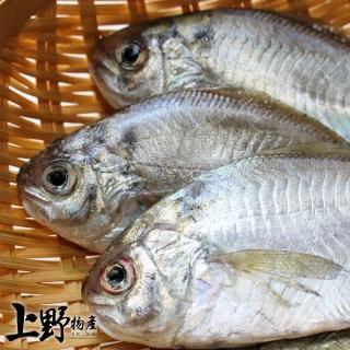 【上野物產】越南野生肉魚 x50隻(75g土10%/隻 肉魚 肉鯽魚)