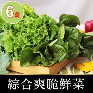 【會呼吸的菜】綜合水耕鮮菜6盒+贈沙拉醬6包(150g±5%/盒)