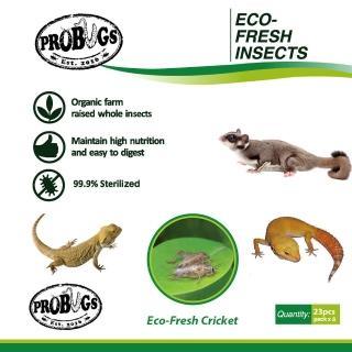 【昆寶寵物原形食糧】白蟋蟀生鮮包美國版(蜜袋鼯/守宮/鬃獅蜥最愛)